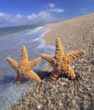 Bonita Springs Beaches Southwest Florida Travel
