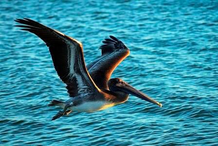 Island Vacations Of Sanibel Amp Captiva Southwest Florida