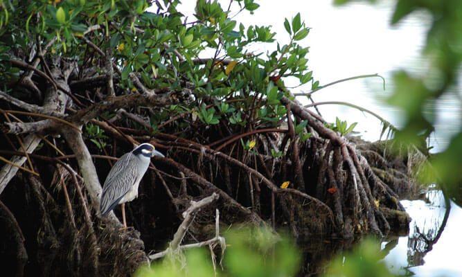 Everglades City Southwest Florida Travel