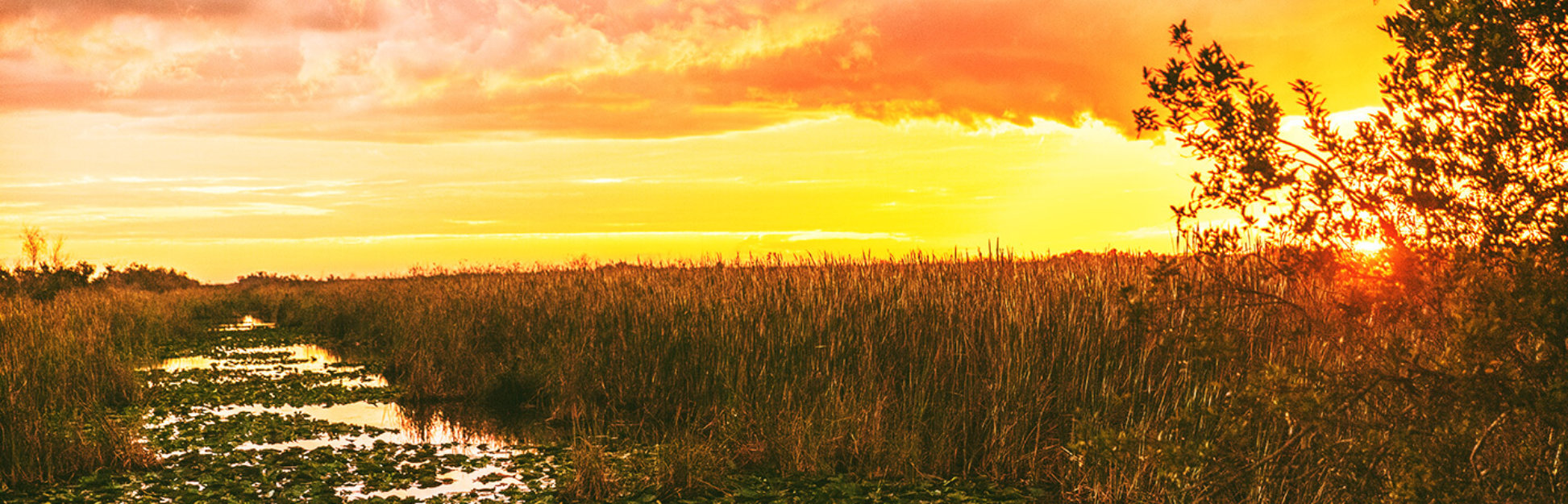 Everglades golden hour